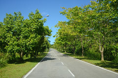 Trees Lined Road Stock Photo