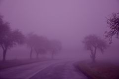 Trees,lines,purple, sky,wet ,fall Stock Image