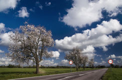Trees lining countryside road Royalty Free Stock Photography