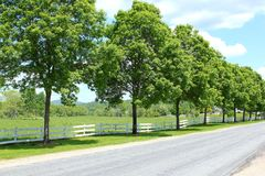 Trees lining a pasture Royalty Free Stock Photos