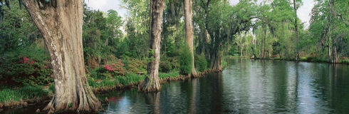 Trees lining a river Stock Image