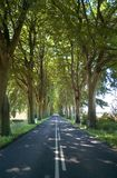 Trees lining straight road Stock Photo