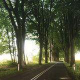 Trees lining straight road. Trees lining a long straight road in the country. Oak alley near Polanow and Naclaw in Poland Stock Images