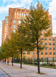 Trees lining a street in The Hague royalty free stock photo