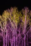 Trees lit by coloured floodlights. At night in a park Royalty Free Stock Photos