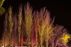 Trees lit by coloured floodlights. At night in a park Royalty Free Stock Photography