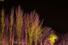 Trees lit by coloured floodlights. At night in a park Stock Images