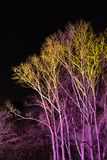 Trees lit by coloured floodlights Stock Images