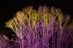 Trees lit by coloured floodlights. At night in a park Stock Photography