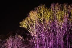 Trees lit by coloured floodlights. At night in a park Stock Image