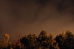 Trees lit at nighttime. Light from a streetlamp lights a row of trees with an orange glow whilst the clouds in the sky illuminate with moonlight Stock Photo