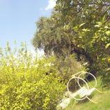 Trees Royalty Free Stock Image