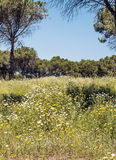 Trees located in Barbate Royalty Free Stock Photo