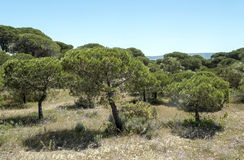 Trees located in Barbate Stock Photography