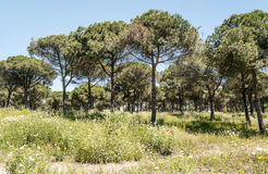 Trees located in Barbate Royalty Free Stock Photos