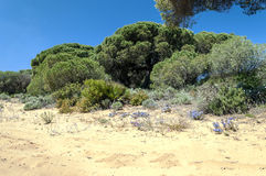 Trees located in the dunes Stock Photo