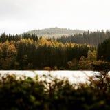 Trees royalty free stock photos