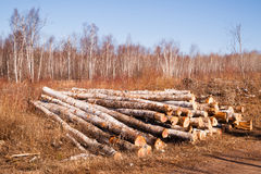 Trees Logs Sit Stacked Northern Minnesota Logging Operation Royalty Free Stock Photo