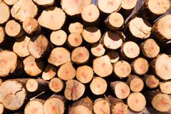 Trees Logs Sit Stacked Northern Minnesota Logging Operation Stock Photos