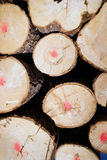 Trees Logs Sit Stacked Northern Minnesota Logging Operation Stock Image
