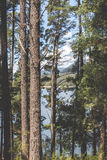 Through the trees royalty free stock photography