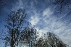 Trees looking to the cloudy sky Royalty Free Stock Photos