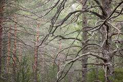 Trees. Los Ports de Beseit Royalty Free Stock Photography