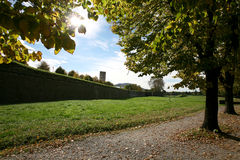 Trees in Lucca, Italy. Park in town Lucca, Italy stock photos