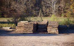 Trees In A Lumber Yard Royalty Free Stock Images