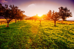Trees on a magical sunset. In Sicily Royalty Free Stock Image