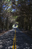 Trees make tunnel. On california highway Royalty Free Stock Photos