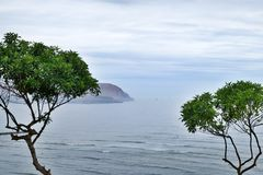 Trees by the pacific coast stock photos
