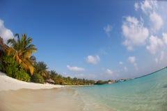 Trees in Maldives near sunny beach sand Stock Photos
