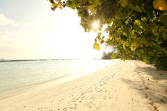 Trees in Maldives near sunny beach sand Stock Photography