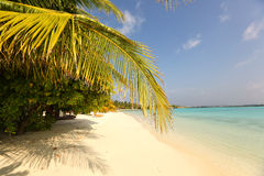 Trees in Maldives near sunny beach sand Royalty Free Stock Photography