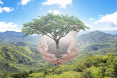 Trees in the man's hand sticking out of the sky on a blurred background. The concept of natural trees to restore the forest. Trees in the human hand emerged out Royalty Free Stock Image