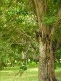 Trees. Many trees in the garden Royalty Free Stock Photo