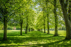 Trees in Marbury Park Royalty Free Stock Photography