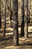 Trees marked for cutting down Royalty Free Stock Photography