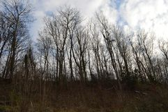 Trees on marl royalty free stock photography