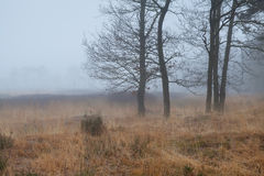 Trees on marsh in dense fog Royalty Free Stock Photo