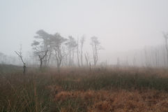 Trees on marsh in dense fog Royalty Free Stock Photos