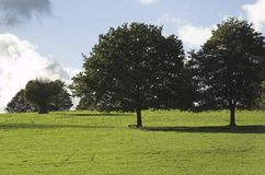 Trees in meadow Stock Images