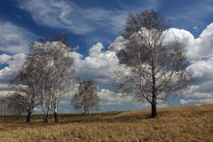 Trees in the meadow against the spring sky stock photo