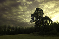 Trees in a meadow below a moody sky Stock Photography