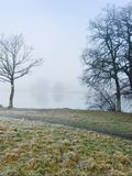Trees and meadow on foggy lake stock image