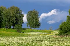 Trees on a meadow with a grass Stock Photography