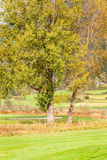 Trees in meadow Stock Photos