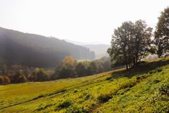 Trees on meadow landscape in early autumn panorama stock photography