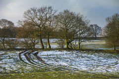 Trees and meadow in light snow Stock Photo